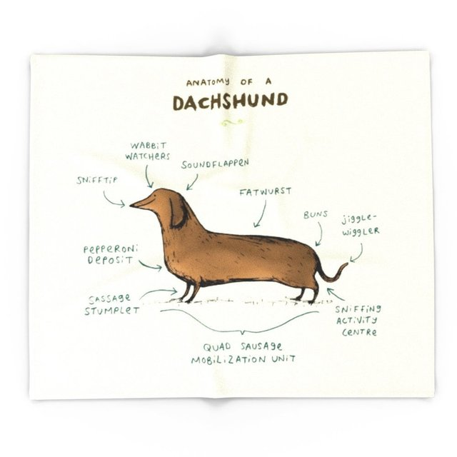 Anatomy Of A Dachshund 51 X 60 Blanket Throw On Sofa Bed Plane