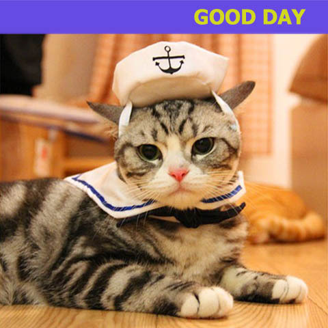 Pet Dog Cat Clothes Funny Costume Sailor Cute Dog Cat Costume Hat+Tie Dress  up Sailor 5b725b3df67a