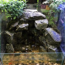 Chameleon lizard reptile rockery water rainforest tank rock background board amphibious tank With pool can plant decoration new
