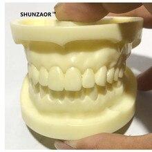 Лучшие Зубные модель dentition Новый высокое качество белый корунд Зуб модель обучения 74*59*54 мм для медицинских студент