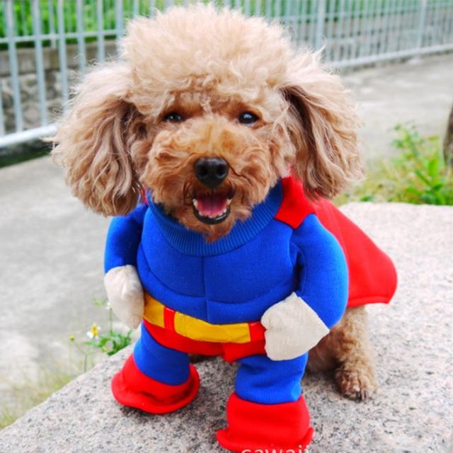 Drôle Halloween Pet Chat Chien Superman Debout Costume Cosplay Petit