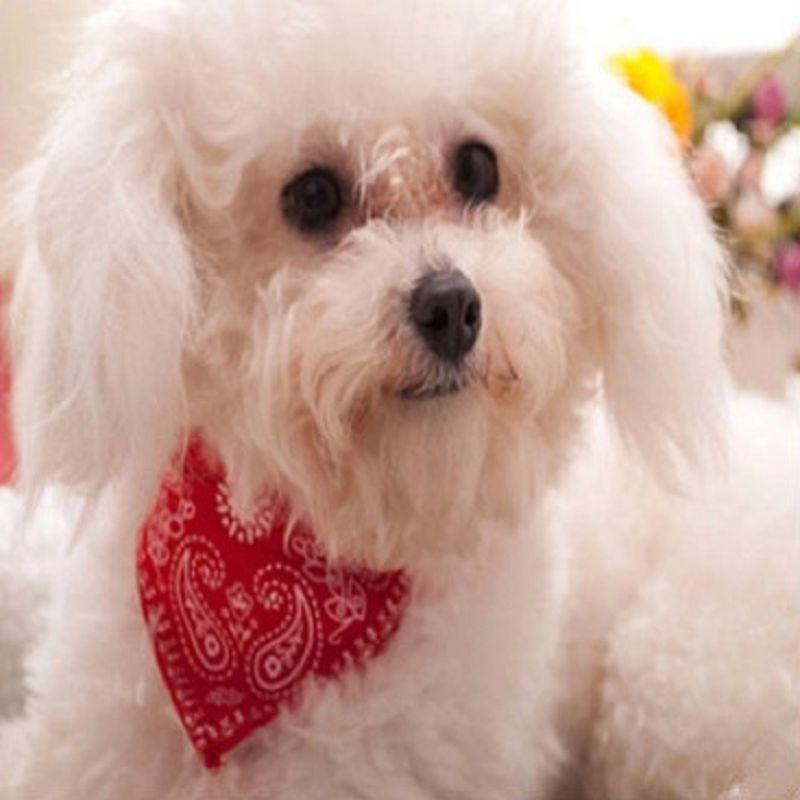 1Pc fashion dog collar Triangular scarf adjustable coleira para cachorro Cat collier pour chien halsband hond harnais chien