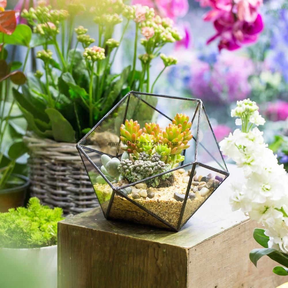 Us 29 38 Desktop Bowl Shape Flower Pot Table Centerpiece Vase Garden Plants Succulents Planter Flowerpot Bonsai Geometric Gl Terrarium In