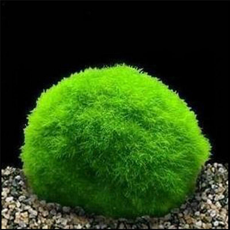 3 4cm Cladophora Live Aquarium Plant Fish Tank Shrimp Nano For MARIMO MOSS  BALLS Fish Tank Ornament W2 In Decorations From Home U0026 Garden On  Aliexpress.com ...