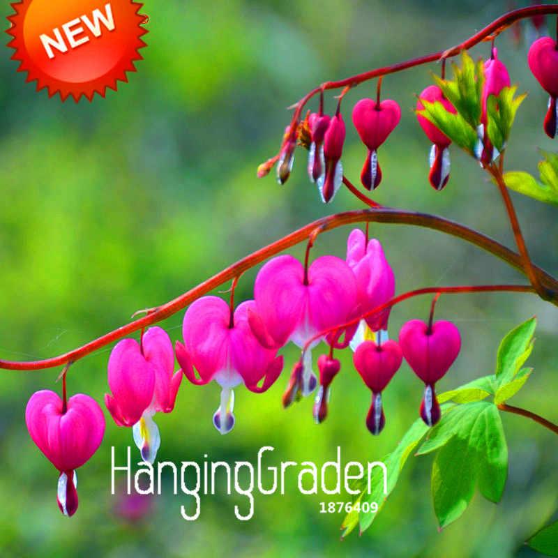 Tempo-Limite!! coração-em forma de Pêssego Flor Fúcsia bonsai Vaso de Flor jardim Plantas Penduradas Flores Fúcsia 50 pçs/lote, # SQIQVT