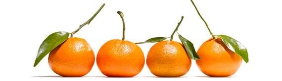 20 Edible Fruit Bitter Orange Seeds, Bonsai Citrus Seville Orange Tree, Bitter Orange Fruit Fresh Exotic Tree Seeds