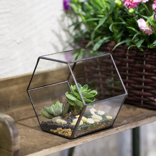 Aliexpress Com Buy Desktop Geometric Hexagon Glass Terrarium