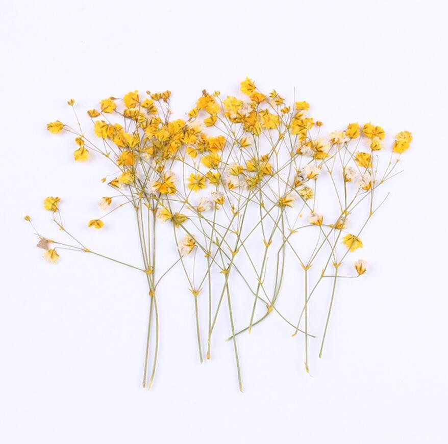 120pcs Pressed Dried Flower Gypsophila paniculata Filler For Epoxy Resin Jewelry Making Postcard Frame Phone Case Craft DIY in Artificial Dried Flowers from Home Garden