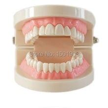 Стоматологическая модель зубного протеза десны стандарт audlt модель зубов медицинский обучающий инструмент зубы модель учебный инструмент