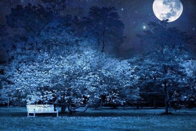 diy frame night bench park trees stars full moon sky light darkness