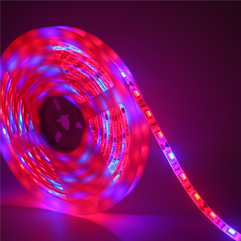 Us 1 54 32 Off Dc12v Led Plant Grow Lights Full Spectrum 5050 Led Strip Red Blue 4 1 3 1 5 1 Hydroponic Apollo Phyto Growing Lamps Greenhouse In