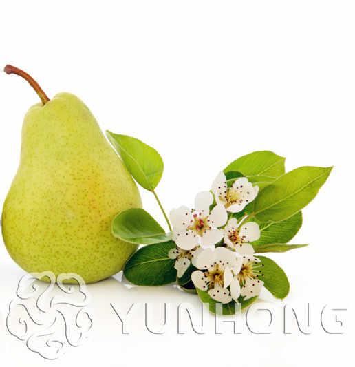 20 Pcs Hot Sale Hijau Pear Gaint Orange Pear Bonsai Buah Manis Tanaman Bonsai Buah Organik Pohon untuk RUMAH & taman Gratis Pengiriman