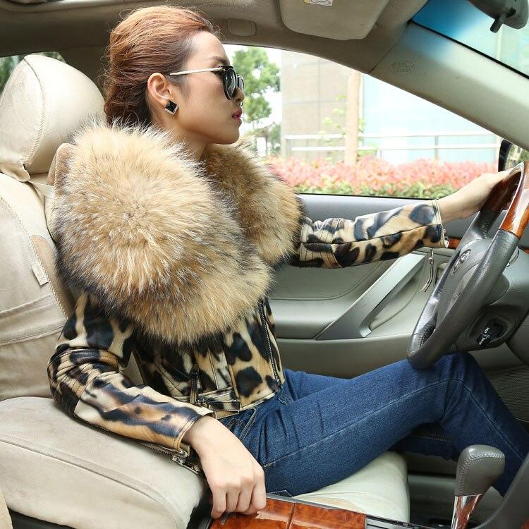 Горячая зима Женская Высокая мода тонкий большой натуральный мех енота воротник короткие из натуральной овечьей кожи леопардовые куртки п