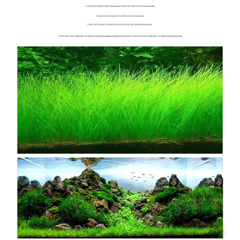 S Fast Growing Aquatic Plants Seeds Grass Seed Decoration for Fish Tank Aquarium Pond