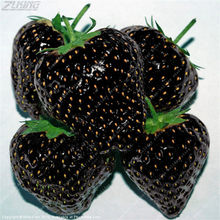 ZLKING 100 Pcs Rare Black Strawberry Exotic Delicious Juicy Tasty Edible Fruit Wild Organic Bonsai Plants Stand Bonsai(China)