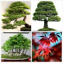 Free shipping 4popular bosai tree seeds total more than 80 seeds mini bonsai seeds Premium Bonsai Package Best Deals