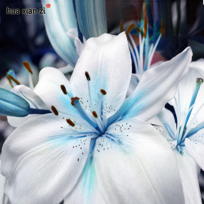 Скидки Синий Сердце Лилии Семена Растений Горшечные Растения Бонсай Цветок Лилии Семена для Дома Сад 50 Частиц/lot