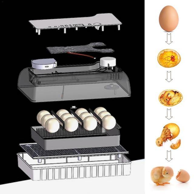 Digital Egg incubator,  Hatcher - Large 12 eggs incubators For Chicken Duck Poultry Quail Eggs 5