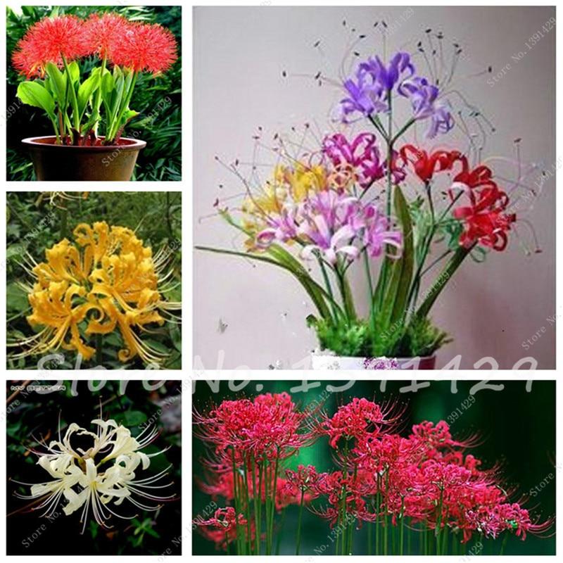 Ornamentales plantas de maceta compra lotes baratos de for 6 plantas ornamentales