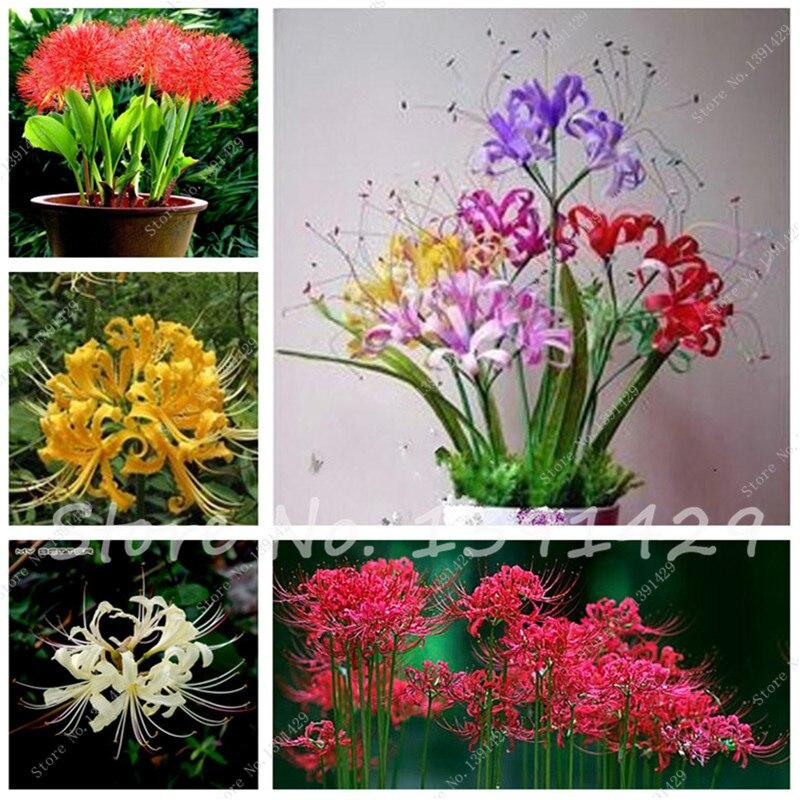 Ornamentales plantas de maceta compra lotes baratos de - Plantas ornamentales de interior ...
