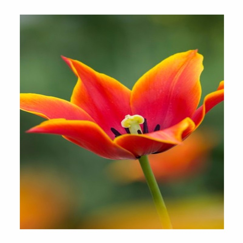 Fruhlingsblumen Pflanzen Tipps