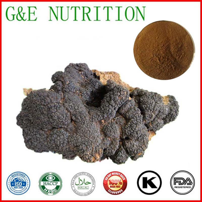 1000g Chaga mushroom/Inonotus obliquus/ Chaga Extract with free shipping
