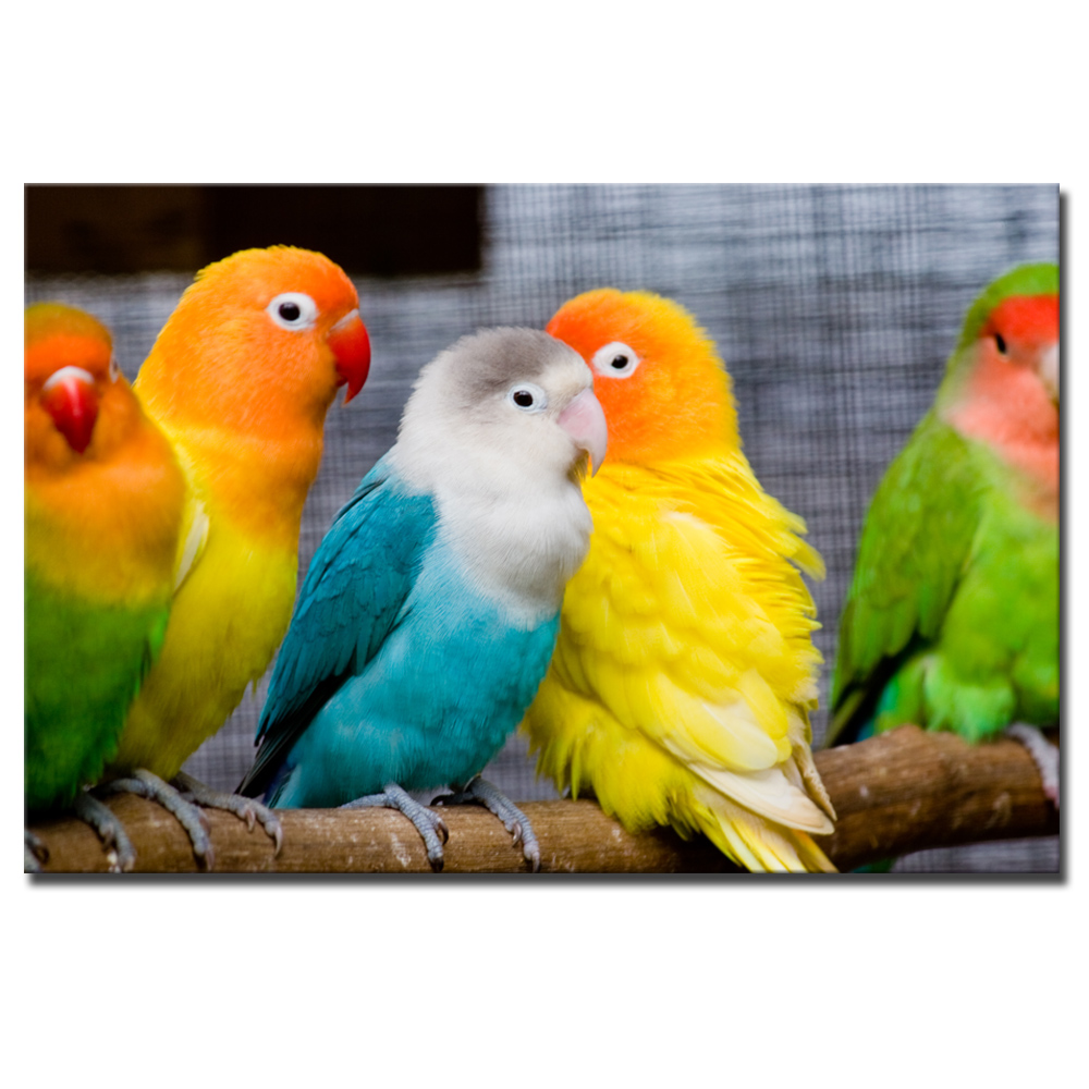 1 Pcs Colorful HD Parrot Canvas Print Painting Cute Bird Artwork ...