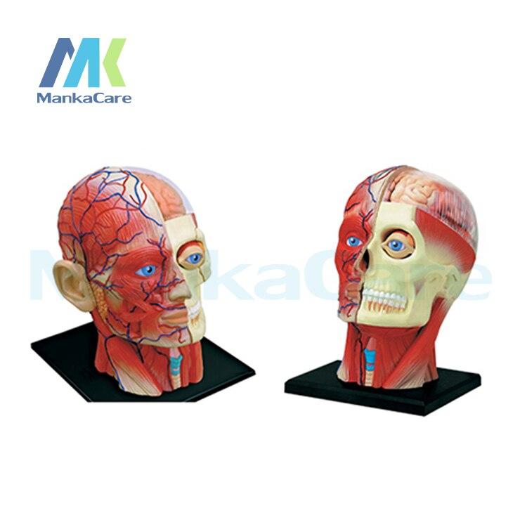 4D Master medizinische menschlichen körper skelett anatomisches ...