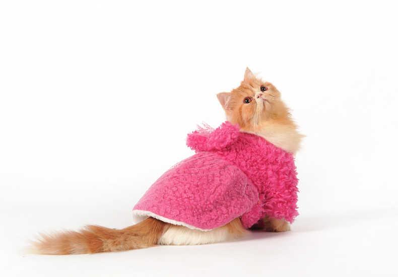 2016 Novo gato dag Vestido Tutu Gato de Estimação Neve Traje branco Princesa Vestidos para Festa de Casamento De Cetim De Inverno do Filhote de Cachorro do animal de Estimação roupas