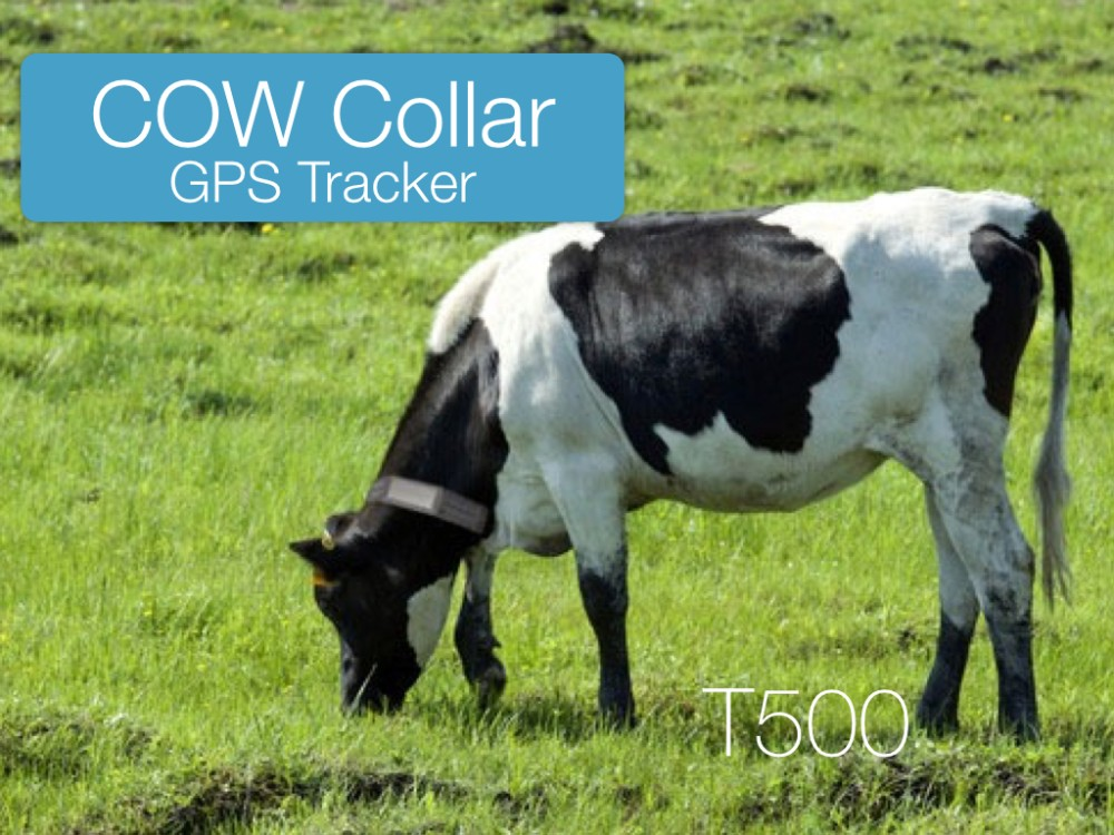T500 Cow GPS Tracker (1)