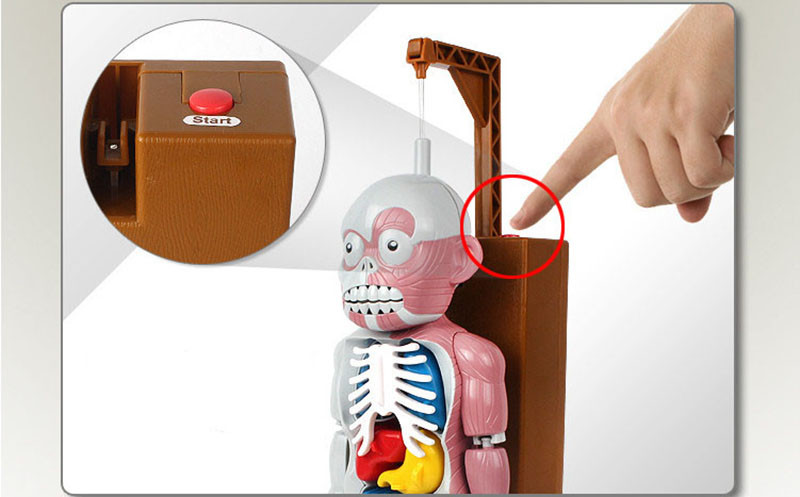 Funny Simulation Human Organs 3D Puzzles Assembled Scary Human Body Model Halloween Tricky Joke Toy Novelty & Gag Toys 7