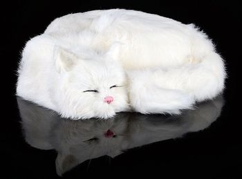 big simulation sleeping cat model plastic&fur white cat toys home decoration gift about 29x31x10cm