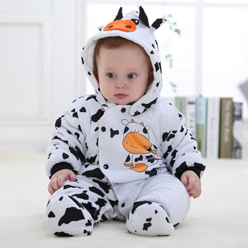 cow800