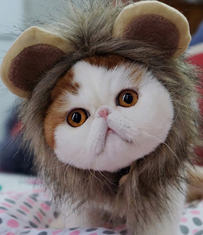 1 pc Lovely Pet Costume Lions Mane Halloween Christmas Party Dress Up With Ear Winter Warm Wig Cat Pet Apparel Cat Fancy Dress
