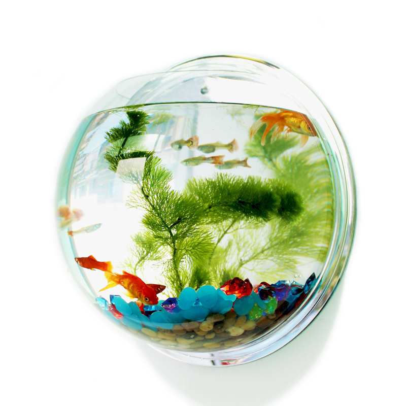 Free shipping acrylic fish bowl wall hanging aquarium tank for Acrylic fish bowl