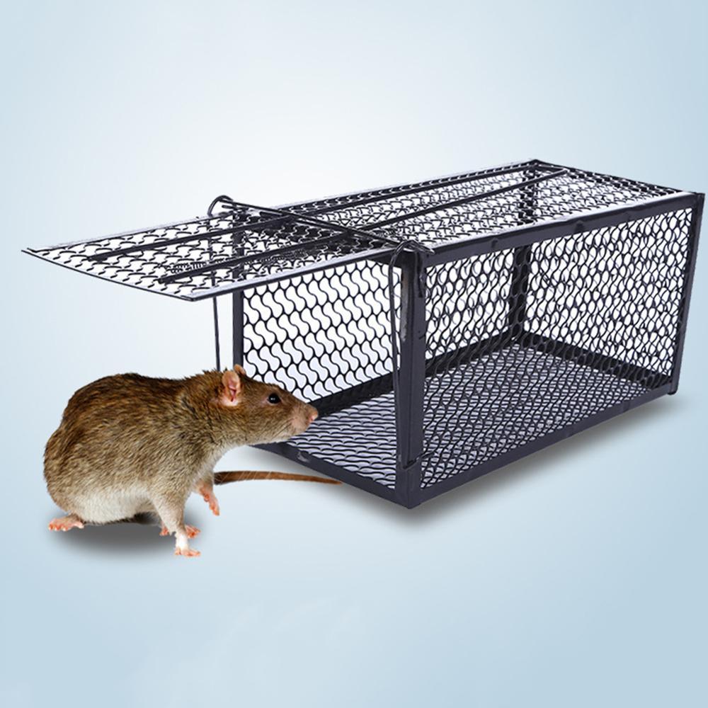 Repelentes de roedores, cebos y trampas