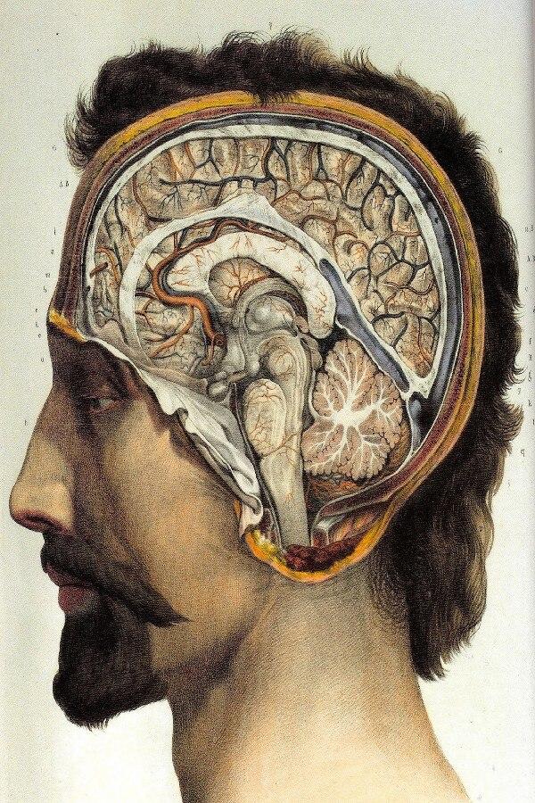 DIY рамка Спецодежда медицинская человеческая сторона мозг хирургическая Анатомия Настенный декор постеры шелк Ткань плакат