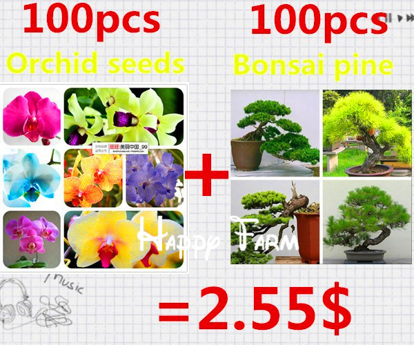 Limit buy 100pcs orchid seeds and 100pcs bonsai pine seeds ,indoor bonsai tree free shipping