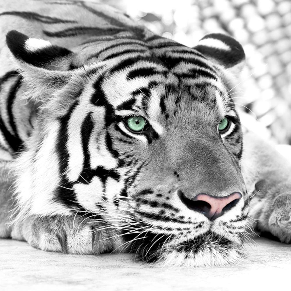 tiger murals-kaufen billigtiger murals partien aus china tiger ... - Fototapete Wohnzimmer Schwarz Weiss
