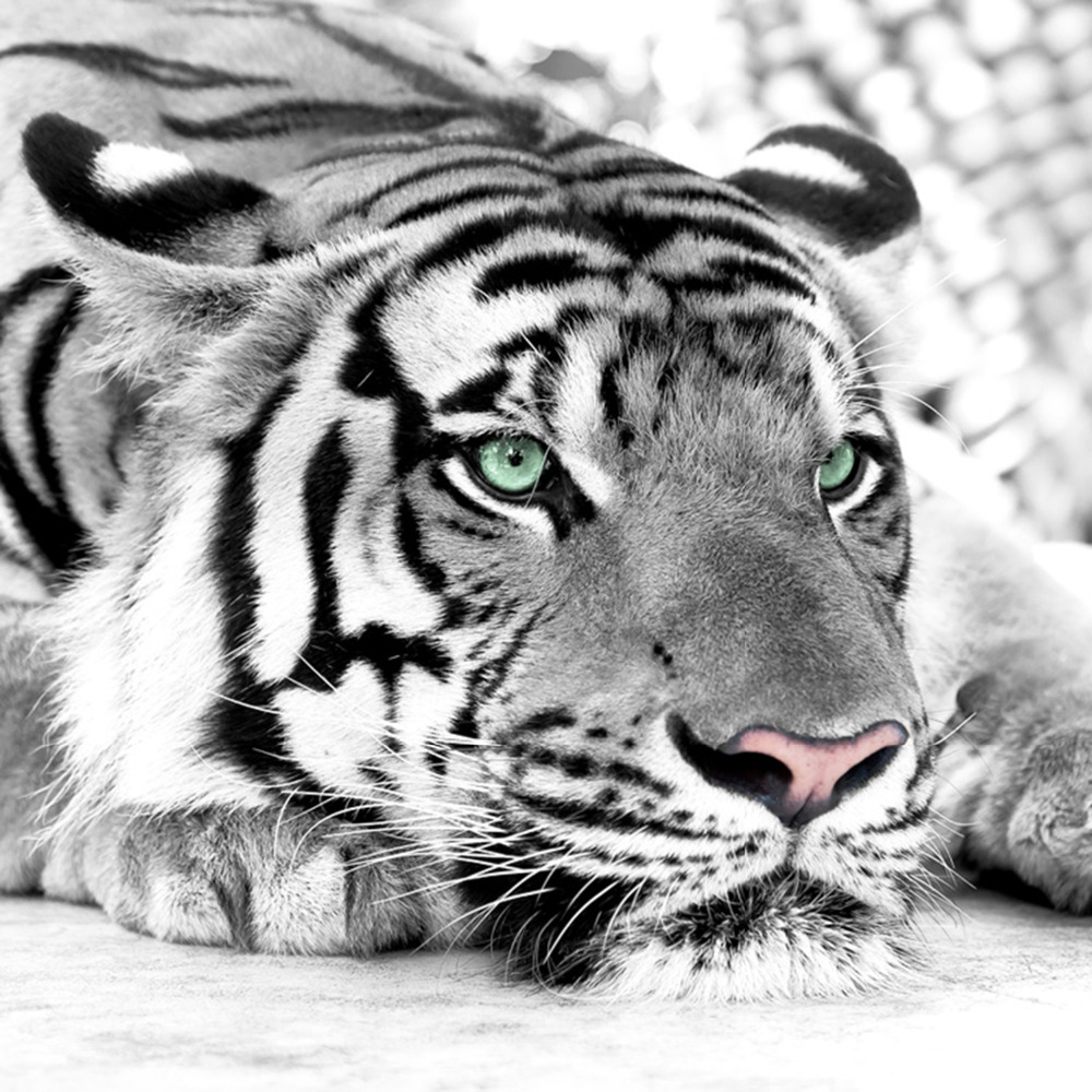 3d photo wallpaper tiger black and white animal murals entrance