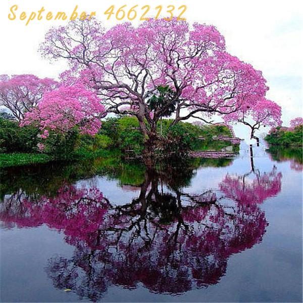 Big promotion 200 pcs bonsai paulownia , Royal Empress Tree (Paulownia tomentosa), ourdoor plants flower home garden pot plants