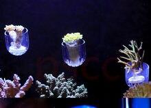 SPS phyto plus кораллы фрагмент Подставка Кронштейн Мини nano сильный магнит фиксировать аквариум Наклонный самолет
