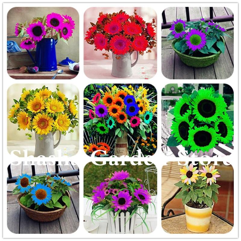 100PCS RARE PURPLE SUNFLOWER SEEDS BEAUTIFUL FLOWER HOME GARDEN ORNAMENT PLANT