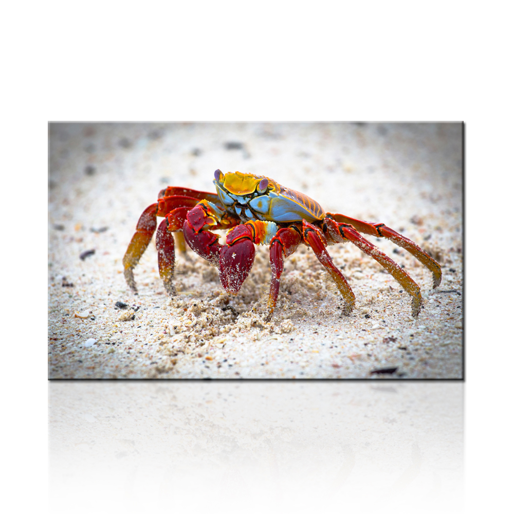 popular crab wall decor buy cheap crab wall decor lots from china free shipping dropship print crab modern canvas paintings artwork home decor for living room decor home