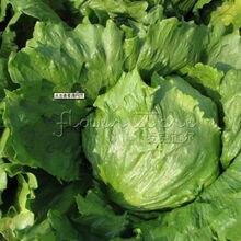 Organic 400 nutritious Buttercrunch Lettuce Seeds home vegetable