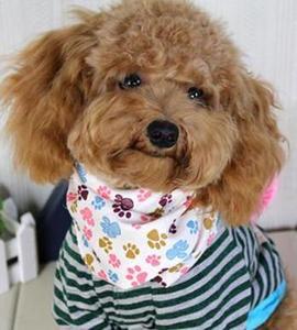 Image 3 - 60pcs/lot  New design Mix 60 Colors Adjustable New Dog Puppy Pet bandanas 100%Cotton Pet tie size S M  Y510