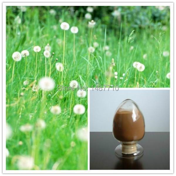 Top Quality Dandelion Extract/ Dandelion Root Extract
