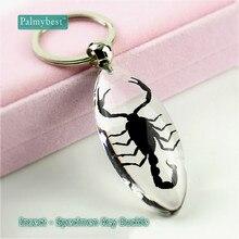 Искусственный Янтарный Брелок для ключей в форме капли воды, Черный скорпион, украшение, талисман, подарочные аксессуары, 1 шт