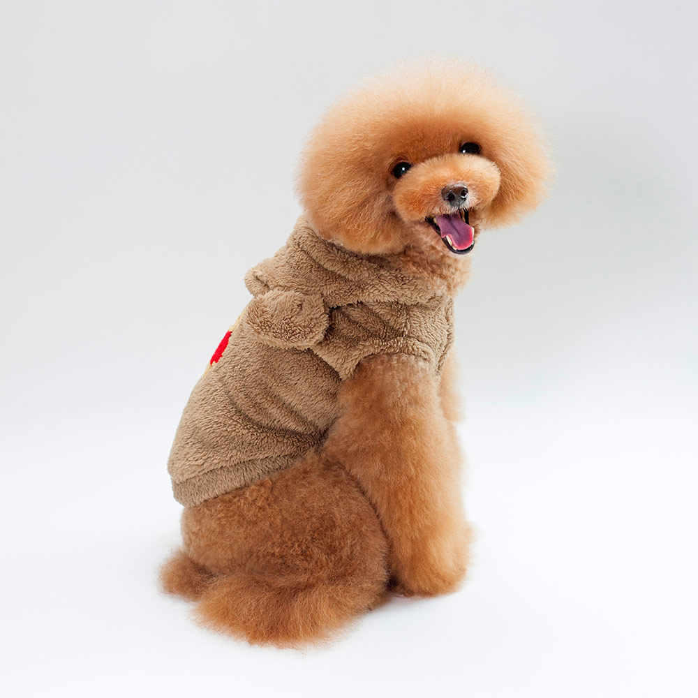 Teddy bear jacket for dogs