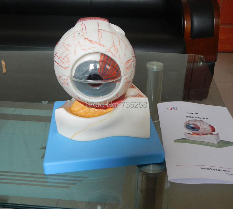 Eyeball Structure Model ,Eye Anatomical Model panorama map of the belt and road chinese version 1380x980mm b